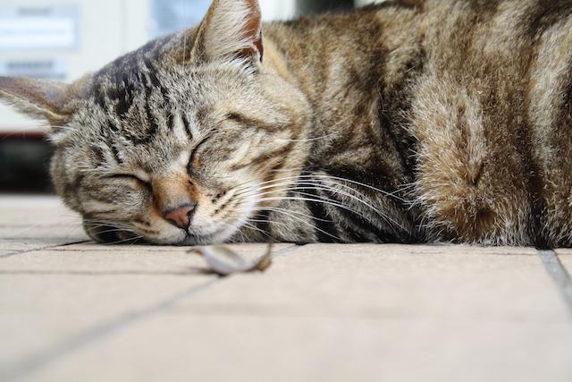 ペニスのサイズアップと睡眠の深い関係とは?